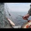 В Керчи браконьер «встрял» на 15 миллионов