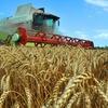 Выпускники аграрных учебных заведений получат субсидию от 150 до 200 тысяч рублей
