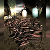 В Ленинском районе поймали рыболовов-браконьеров