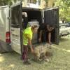 На стерилизацию бездомных животных потратят 2,3 миллиона