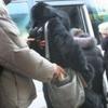 В Керчи поймали автобусного карманника