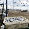 С начала года браконьеров в Крыму оштрафовали на 7 миллионов