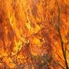 В Крыму еще на три дня продлили пожароопасный период