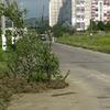 На дороге «посадили» дерево: в Керчи закончились предупреждающие знаки?
