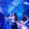Акулы прямо над головой: гигантский аквариум в Дубае