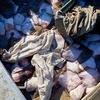 Суд в Керчи арестовал украинских браконьеров