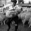 Под Керчью воровали и ели овец