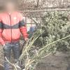 Керчанина «приняли» с 12 килограммами марихуаны