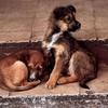 В Керчи ищут утилизатора бездомных животных