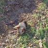 В Керчи собаке отделили голову от тела