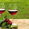 В Крыму презентуют винный туристический маршрут