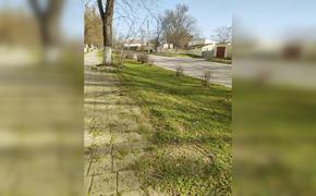 Керчане удивились, что траву на улице покосили в марте