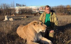 Парк львов «Тайган» закрыли на месяц
