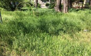 Керчане в сети недоумевают, как играть на площадках, заросших травой