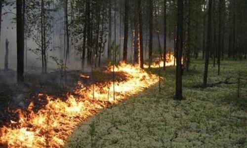 Пожарные борются с огнем в Ленинском лесничестве
