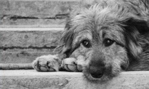Темой убийства бездомных животных в Керчи заинтересовались в Москве