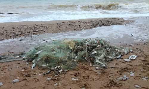 Какую рыбу запретят вылавливать в Крыму