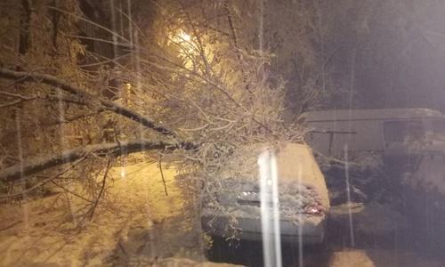 На Керчь падал снег, от снега падали деревья