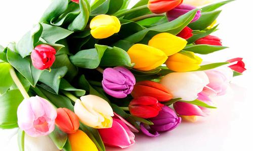 Керчанок начали поздравлять с 8 марта