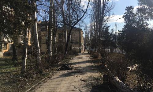 В Керчи упавшее дерево убило пешехода