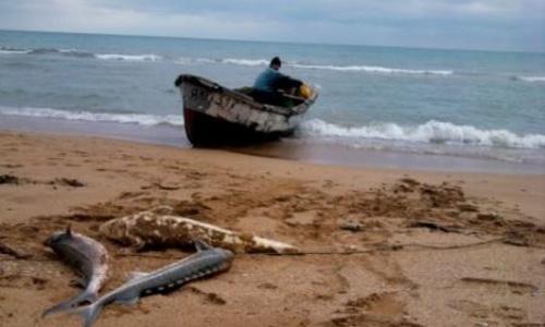 Отныне рыбаками в Керчи могут стать только предприниматели и юрлица