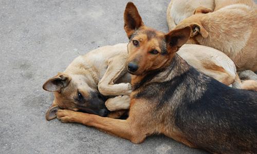 В Керчи занялись бездомными животными