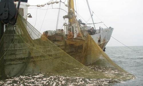 Добытые рыбаками морепродукты разрешили доставлять вне морских портов