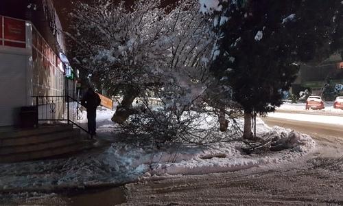 Очередное дерево упало на пешеходную дорожку