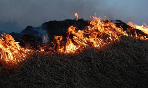 В Крыму будет пожароопасно еще 4 дня